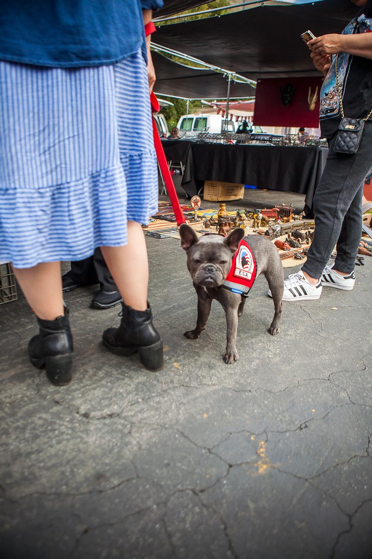 ローズボウルの犬:ブヒ