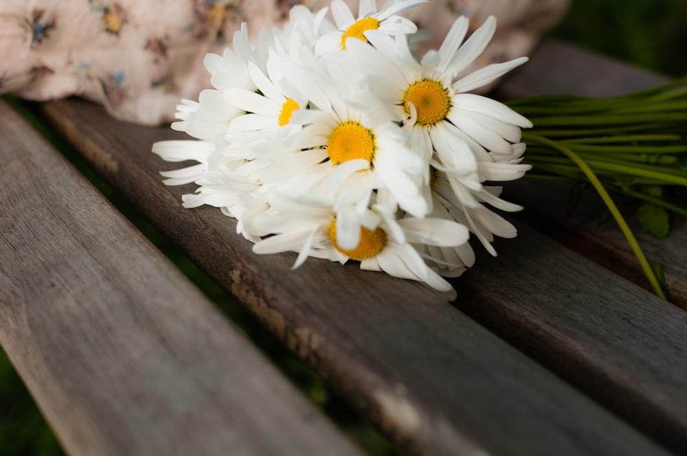 キク科の植物であるカモミールは、古くから薬草として使われています